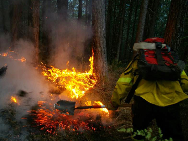 IncendiosForestales25