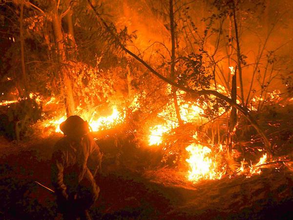 IncendiosForestales26