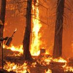 Imágenes alusivas al Día Internacional del Combatiente de Incendios Forestales para compartir y regalar