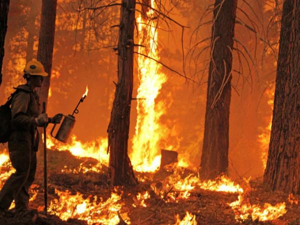 IncendiosForestales27