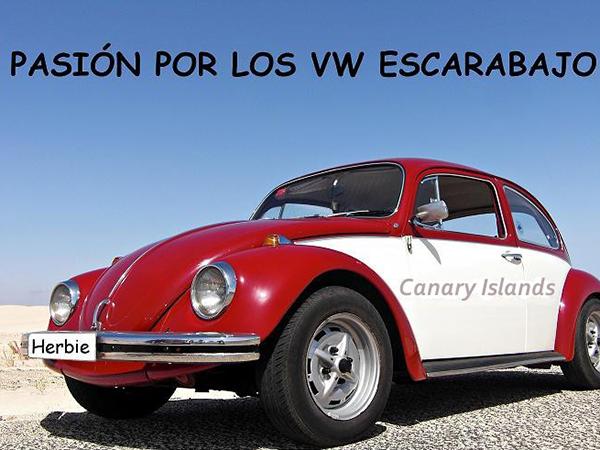 DiaDelEscarabajo19