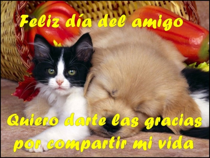 amigos2-1024x769