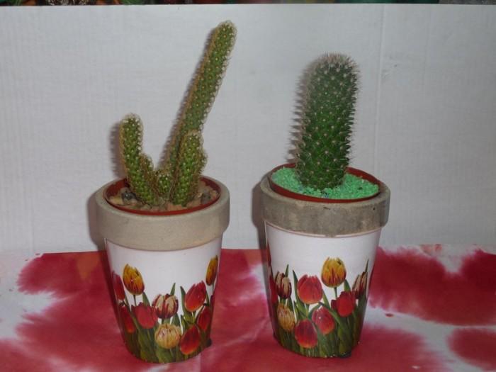 plantas-para-regalar-dia-del-amigo