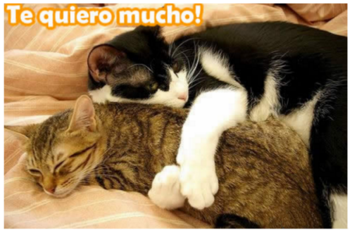 HermososGatitos29