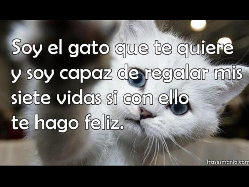 HermososGatitos34
