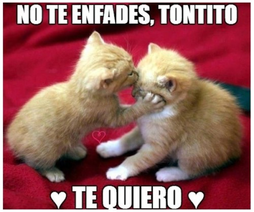 HermososGatitos39