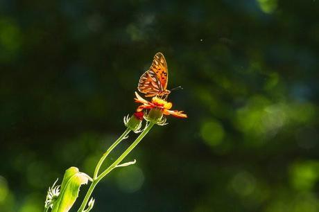 el-botanico-cumple-anos-el-mes-primavera-L-r51762