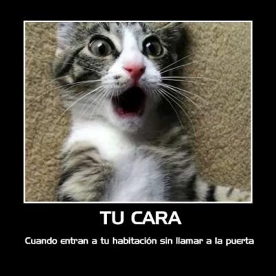 gatitos-en-situaciones-graciosas-16