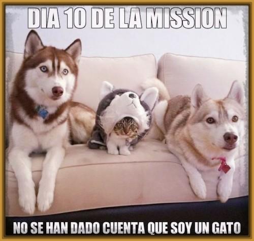 gatos-y-perros-graciosos-con-frases