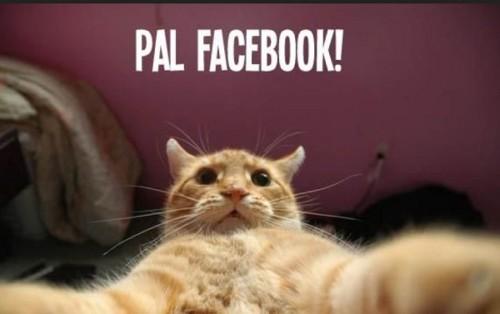 imagenes-de-gatos-graciosos-con-frases-cortas