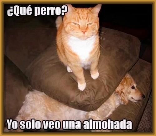 imagenes-de-gatos-graciosos-con-frases
