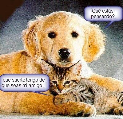 45 Imágenes De Gatos Y Perros Con Frases Chistosas Y Divertidas