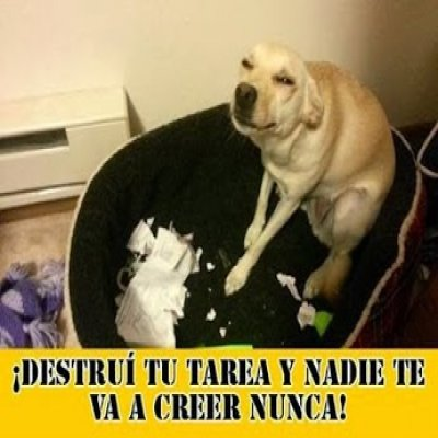 perro-destruye-la-tarea