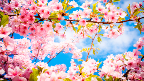 fondos-de-pantallas-bonitos-gratis-flores