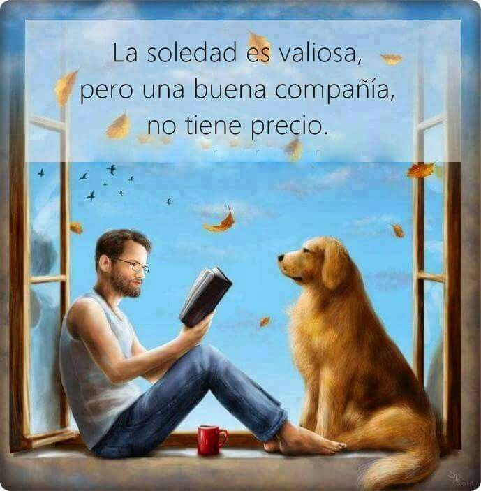Imágenes De Animales Con Frases Motivadoras